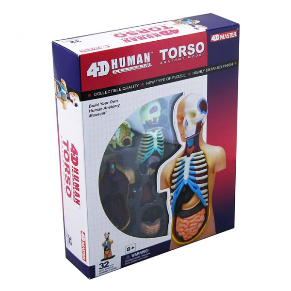 Human Torso 600x600 - 4D Vision Learning Resources Human Torso Model