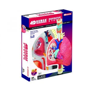 Respiratory System Anatomy Model 300x300 - 4D Vision Respiratory System Human Model